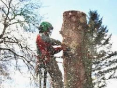 Tree-Mendus Tree Service