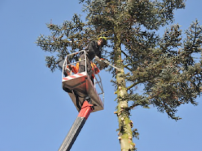 A-Mike's Tree Service